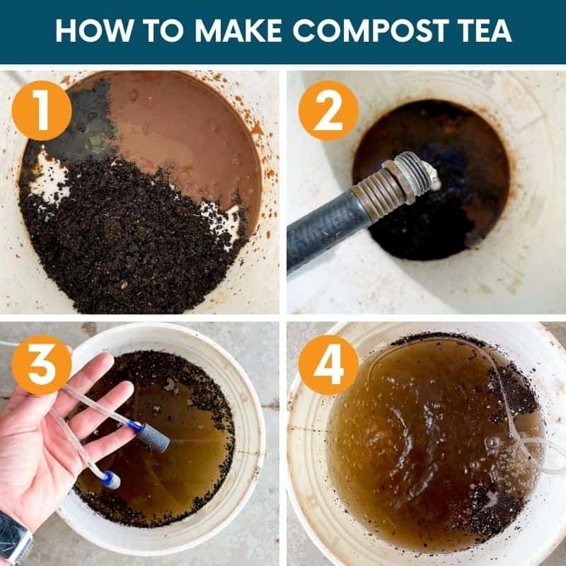 Step by step images for making compost tea
